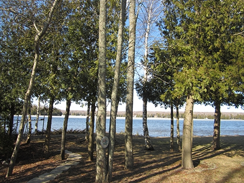 View of the lake through the trees from Diane Gissell.
