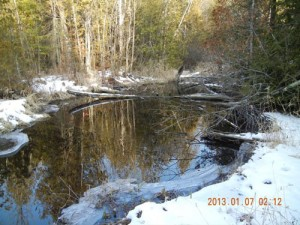Peil_Creek_2
